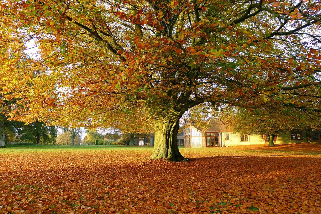 The grounds of the Krishnamurti Centre in Autumn