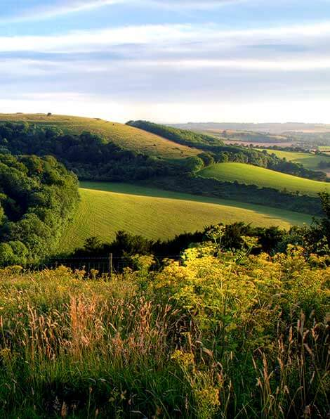 Landscape of the South Downs National Park